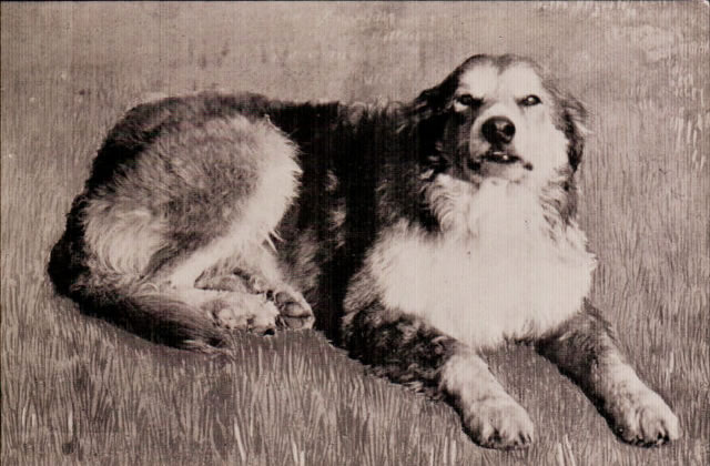 Oregon Trail dog - ca 1906
