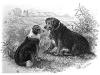 Collie - 1865