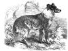 Shepherds Dog - 1870