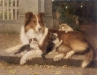 Collie and Kittens Best of Friends