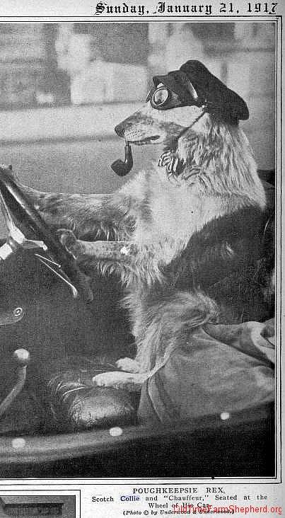 Poughkeepsie Rex - 1917