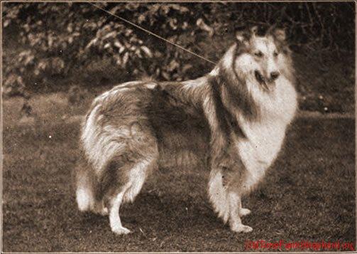 Champion Balgreggie Hope - 1905