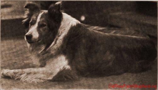 Beau Brummel - 1911