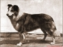 Historic Collie Photographs