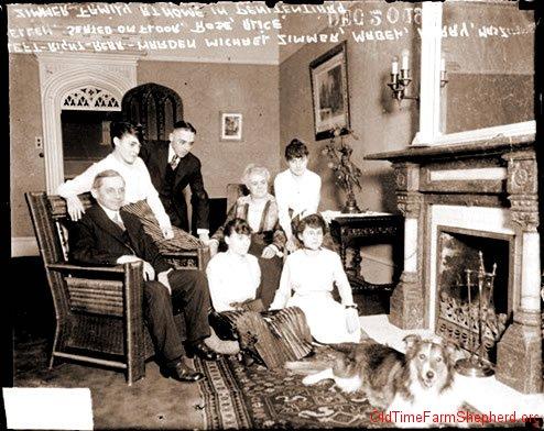 Scotch Collie 1915
