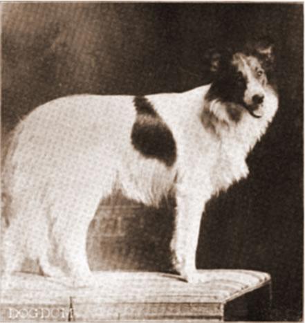 Lassie Ellwyn