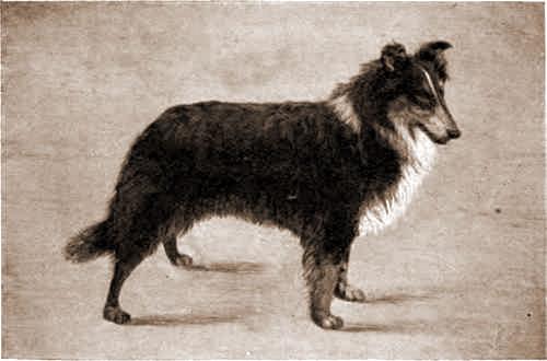 Ormskirk Alexandra - 1903