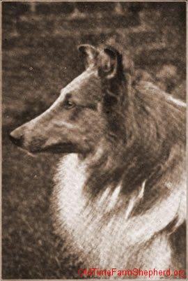 Scarisbrick Star - 1905