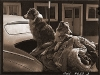 shepherd dogs - 1942