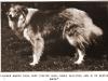 jack-spinster-farm-1908