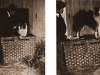 The Dog Book - 1906