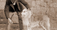 An Old Scotch Collie