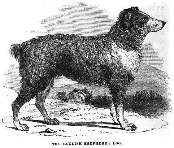 from Lessons Derived from the Animal World, 1847