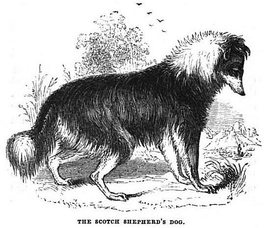 sc-dog