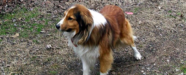 Registering Dog As Service Dog Ca