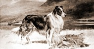 The Dogs of Great Britain 1894 - December