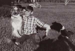 Rex with two shepherd dogs