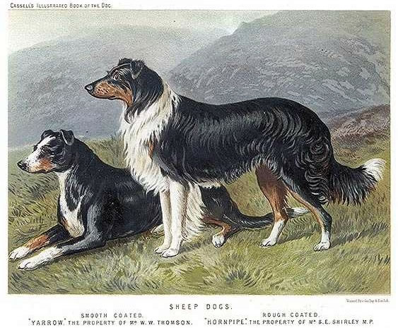 Vero Shaw's collie illustration