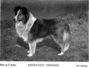 Edgbaston Premier - British Collie 1897