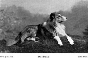 Douglas - British Collie 1897