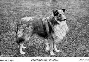 Clivebrook Ralph - British Collie 1897