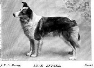 Love Letter - British Collie 1897