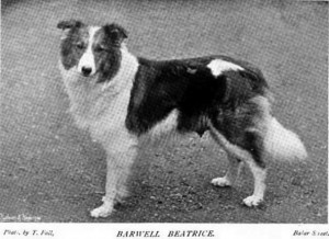 Barwell Beatrice - British Collie 1897