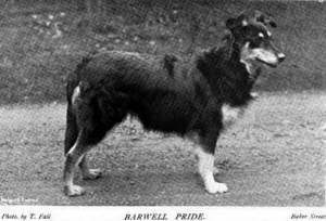 Barwell Pride - British Collie 1897