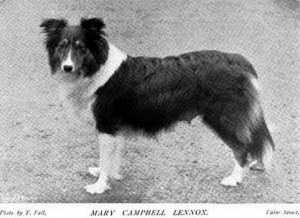 Mary Campbell Lennox - British Collie 1897