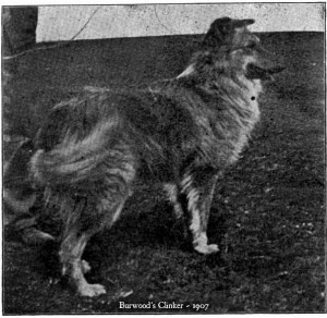 Burwood's Clinker, a scotch collie of 1907