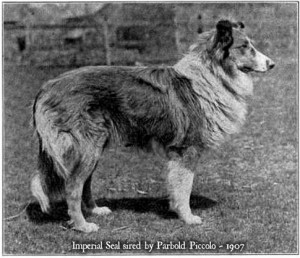 Imperial Seal, a scotch collie of 1907